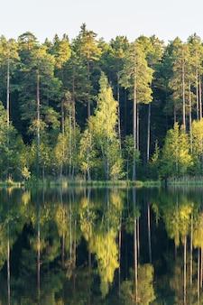 森の中の美しい夏の水に緑の木々が映る森の湖純粋な自然の美しさ