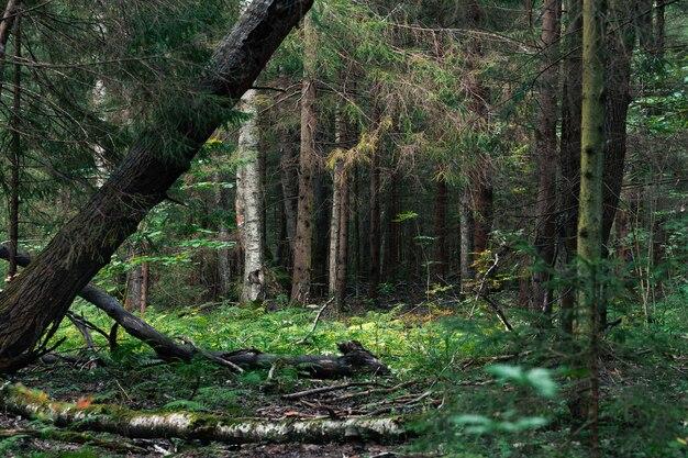 倒木と夏の日の野生の茂みの森の風景
