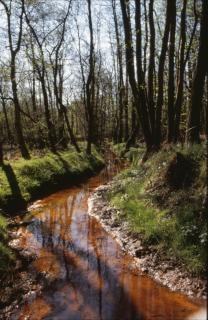 Forest landscape, nature, outdoors