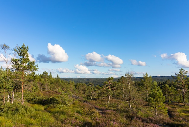 Forest landscape in norway with blue sky