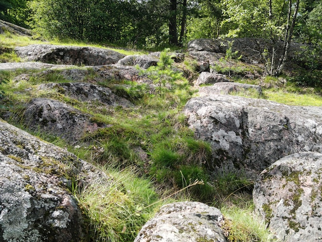 큰 오래 된 돌과 바위에 이끼와 숲 풍경.