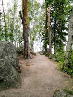 큰 오래된 돌과 소나무가 있는 숲 풍경