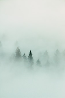 Forest landscape with dense fog