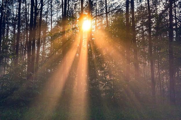 濃い霧と光線のある森の風景
