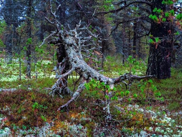 숲 괴물 북극의 울창한 북부 숲