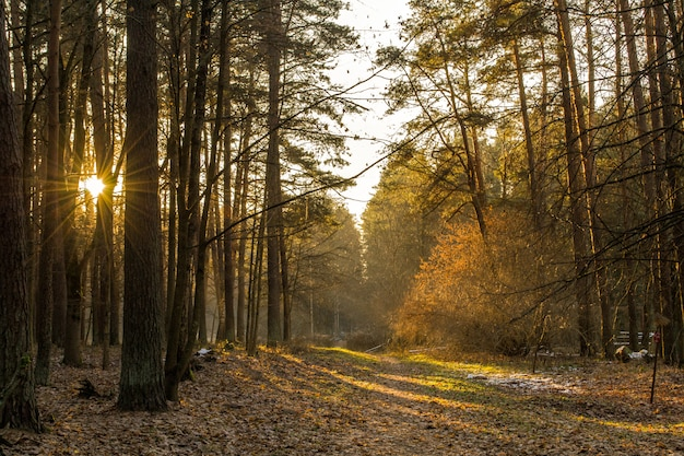 Forest in the morning. the sun shines through the trees. the road leads into the forest.