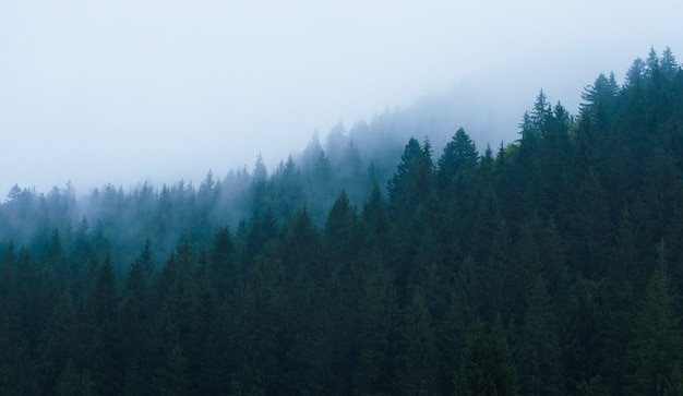 Forest in the mountains in a haze against the sky
