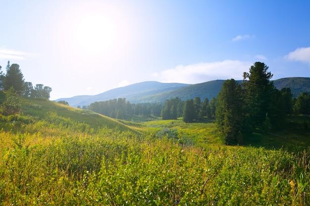 Лесные горы в солнечный день Бесплатные Фотографии