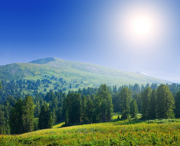 Forest mountains in sunny day