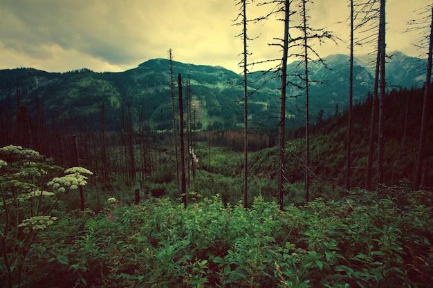 Foresta in montagna.