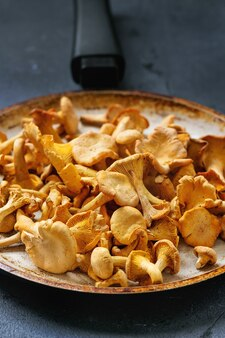 Forest mushrooms chanterelle