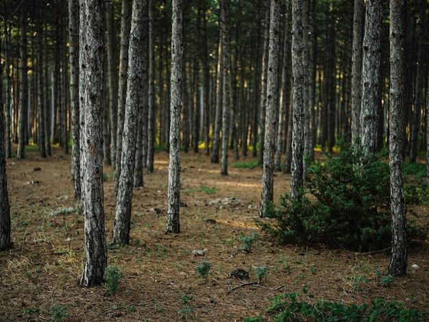 森の自然の木の風景はアクティブなレクリエーションを旅行します