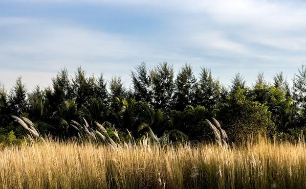 다양한 캣킨 꽃, 소나무, 코코넛 나무가 있는 바다 해변 근처의 숲