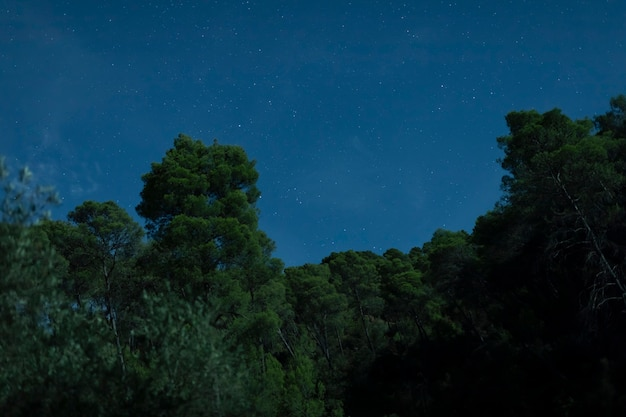 Forest in night time with dark sky