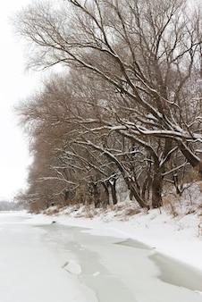 돈 강 유역의 얼음 숲. 러시아의 겨울 풍경입니다.