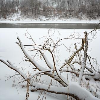 돈 강 유역의 얼음 숲