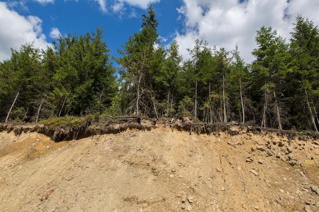 崩壊した丘の端にある森