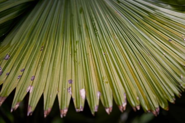 Лесопарк макро природа зеленый
