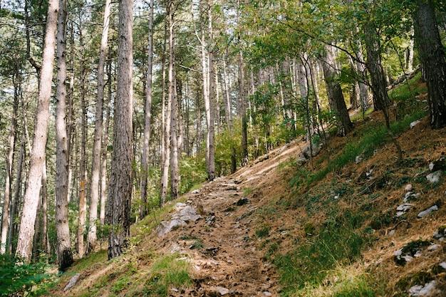 背の高い木々に対する森の茂みの斜面に沿った森の小道