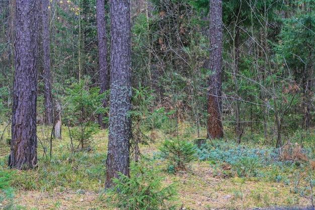 葉と木々のある森の小道