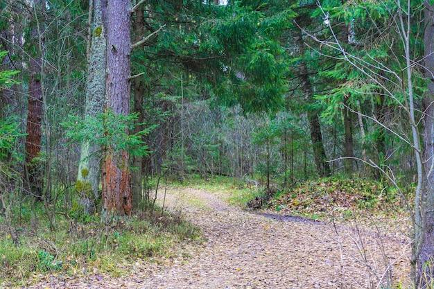 葉のある森の小道