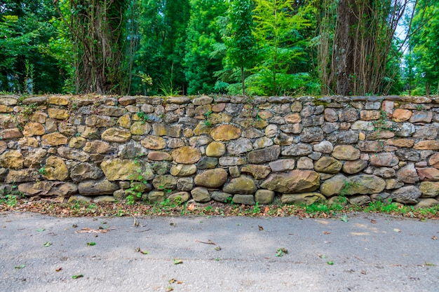 Forest path with old stone wall with moss and vegetation