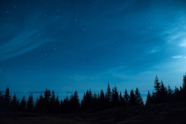 Forest of pine trees under moon and blue dark night sky with many stars