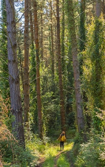 Forest pines and a young woman underneath looking up