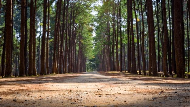 여름 빛 아침에 숲 파이프 나무