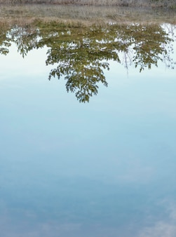 Forest reflected in water lake