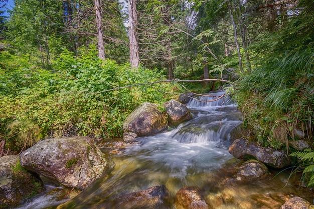 Вода ручья лесной реки медленно течет сквозь камни в лесу.