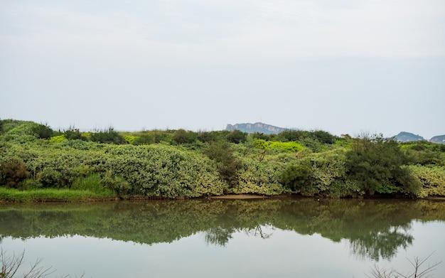 숲 강 물 풍경 장면