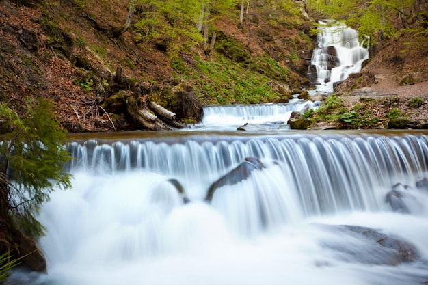 Forest river with active water flow