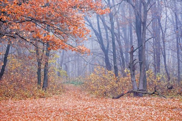 林道はオレンジ色の葉で覆われています。森の中の秋。森の木々のある秋の風景
