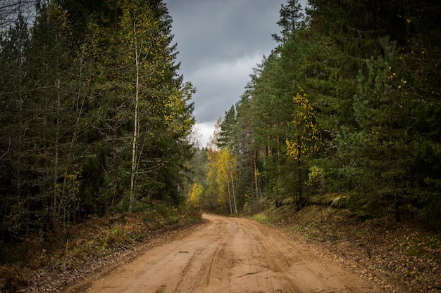 Forest road going through autumn forest