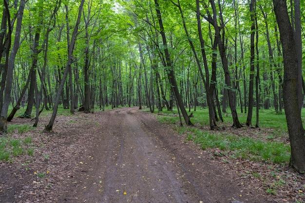 林道。サマラスカヤルカ。ロシア。
