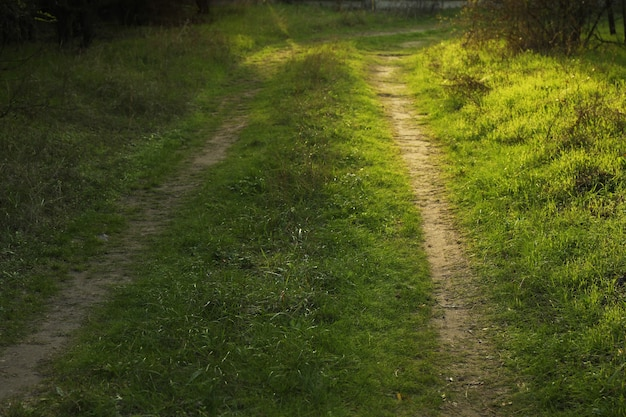 Forest road with green grass and sunlights