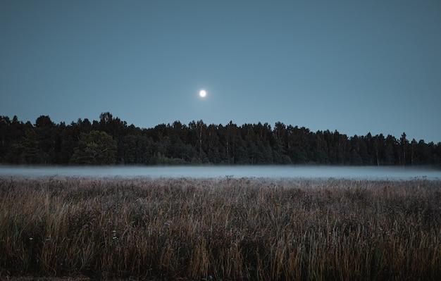Forest shrouded in fog