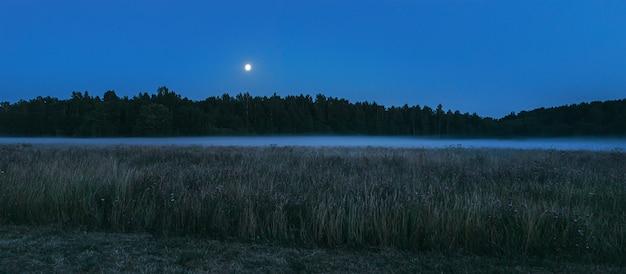 Лес окутан туманом