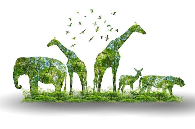 Силуэт леса в форме дикой природы диких животных и концепции сохранения леса