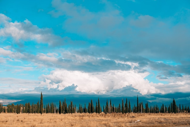 숲 스카이 라인 하늘. 하늘 배경에 숲의 얇은 스트립. 몬테네그로 포드 고리 차.