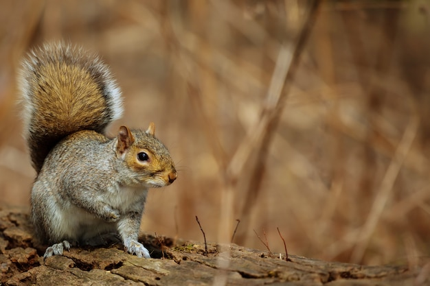 Forest squirrel park