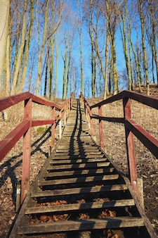Forest stairs up