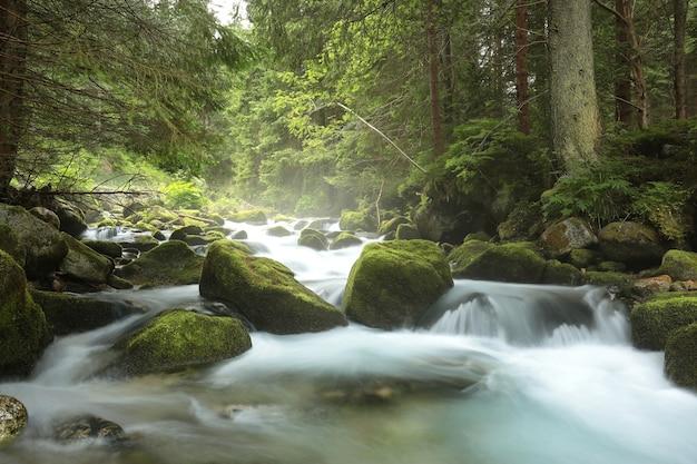산에서 아래로 흐르는 숲 스트림