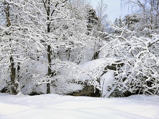 ノルウェーのラルヴィークで日光の下で雪に覆われた岩や木々に囲まれた森