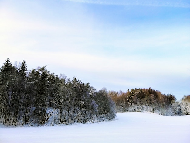 Лес в окружении заснеженных деревьев под солнечным светом в ларвике в норвегии