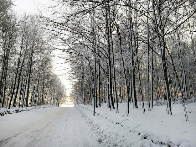 Foresta circondata da alberi coperti di neve sotto la luce del sole a larvik in norvegia
