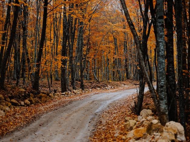 숲길 나무 가을 황금빛 나뭇잎 자연