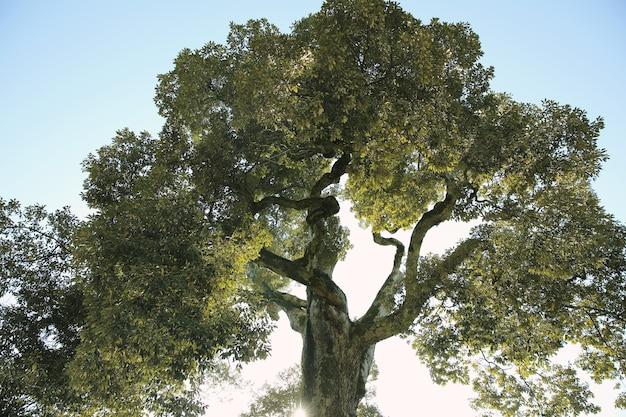 햇빛 숲 나무