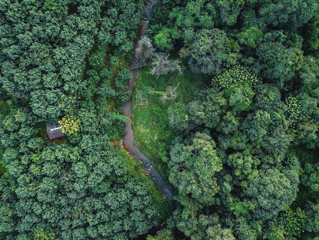 위에서 저녁 시골의 숲, 나무 및 녹색 도로.